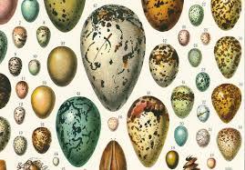 1933 Antique Eggs Identification Chart Print Vintage Bird Eggs Print Eggs Wall Art Home Decor