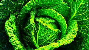 Cabbage Jam - YouTube