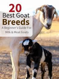 20 Best Goat Breeds