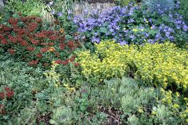 what are good plants for rock gardens photo 10