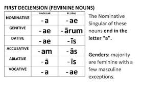 Latin Declension Chart Worksheets Teaching Resources Tpt