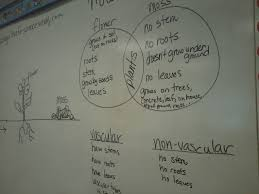 Venn Diagram Of Vascular And Nonvascular Plants Science Today Plants And Data Sharing A Love For Science