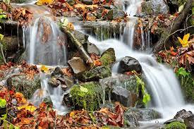 fall leaves waterfall flowing water