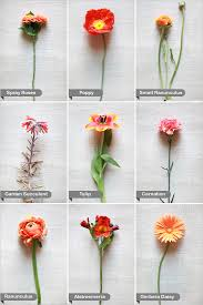 types of flowers with names. all types of flowers names and pictures gallery, beautiful flower with