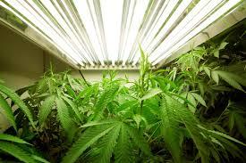 where is marijuana completely legal