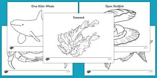 You can also create your own ocean coloring book and share it with. Free New Zealand Under The Sea Printabel Colouring Pages For Kids