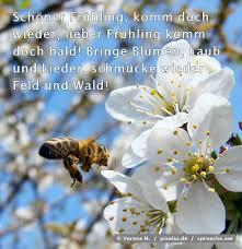 Frühlingsprüche Top 10 Die Besten Sprüche über Frühling