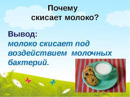 Презентация по окружающему миру Почему скисает молоко класс Почему скисает молоко Вывод молоко скисает под воздействием молочных бактер