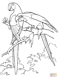 scarlet macaws coloring page parrots coloring pages free coloring pages on parrot outline template