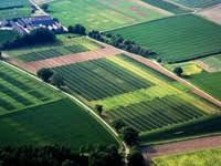 Филиал ФГБУ Федеральная кадастровая палата Росреестра по  Сведения ЕГРН об обособленном земельном участке выдаются в составе единого землепользования