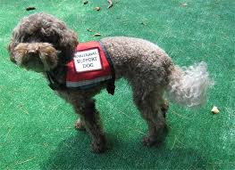 Emotional support animal real Plane Emotionalsupportdogjpg Real Property Management Why Are There So Many Service Animals