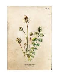 A set of four vintage wild flower botanical prints are an easy way to add  charm ...