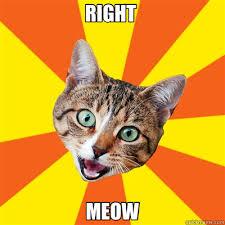 RIGHT MEOW - Bad Advice Cat - quickmeme via Relatably.com