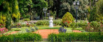 a garden with more than 18 000 roses in the heart of parque tres de febrero