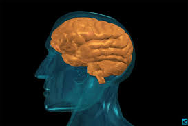 things you didn t know about the brain human brains are big