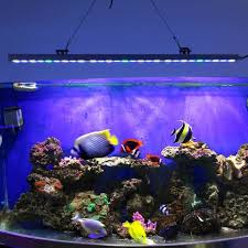 fascinate your aquarium with marine led lighting bit ly 1u0psy2