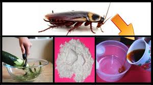 How To Get Rid Of Cockroaches Permanently And Fast In Kitchen