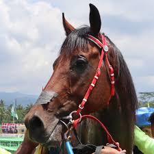 Hasil gambar untuk foto kuda Gagak Lumayung