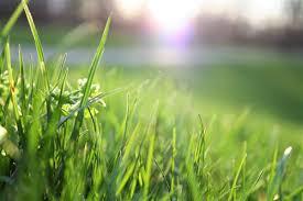 500 Beautiful Lawn Care Photos Pexels Free Stock Photos