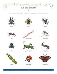 Small Crawling And Flying Animals Worksheets Teaching
