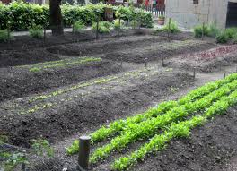 garden rows better for planting square foot gardening vs row