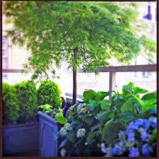 Small Picture NYC Small Terrace Balcony Roof Garden Container Plants Shade