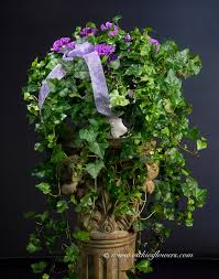 indoor plants ip 029 100 plus tax and delivery very large ivy decorated with cut purple carnations in white decorative vase