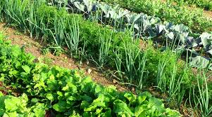 tips for setting up a vegetable patch