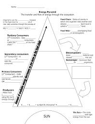 Blank Food Pyramid Chart 75 Interpretive Ecosystem Pyramid Diagram