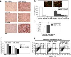 2 02 Skeletal Muscle Chart Vascular Endothelial Growth Factor Stimulates Skeletal