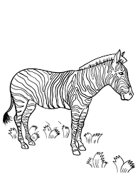 Smiled african zebra coloring book. Free Zebra Coloring Page