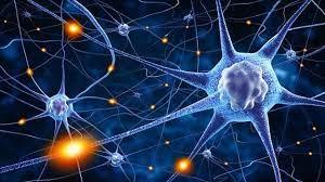 Cuántas neuronas tiene el ser humano?