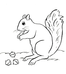 Small Picture Squirrel Coloring Page Samantha Bell