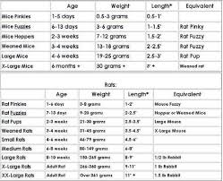 Weight Size And Age Chart Corn Snake Bearded Dragon