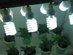 Horticultural Led Grow Lights Walmart Best Light For Indoor Growing Led Grow Lights Led Garden