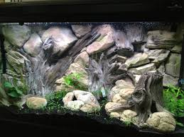 Cool Aquariums Cool Example Of Aquarium Decoration With Our 3d Root Background