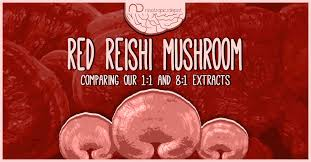 Which is the Best Red <b>Reishi</b> Mushroom Extract <b>For</b> You ...