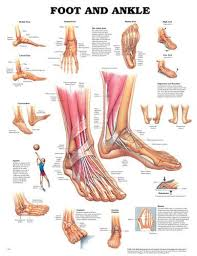 The Foot Ankle Chart 9781587791376 Medical Supplies