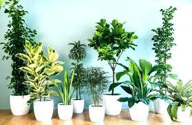 pet friendly indoor plants cat safe indoor plants best low light pet houseplants dog friendly indoor plants australia