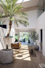 How To Decorate With Indoor Plants Tips And Tricks From The Pros Best Palm  Trees Ideas