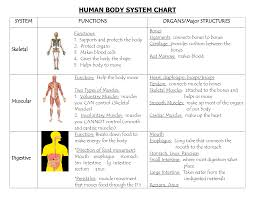 Systems Of The Body Human Body System Chart Human Body