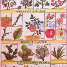 Vitamins Chart Chart Number 98 Minikids In