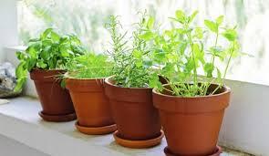 apartment herb garden.  Garden Herb Garden Set Throughout Apartment Herb Garden M