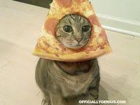 100+ Best <b>Cat</b> breading! images | <b>cats</b>, feline, <b>cat bread</b>