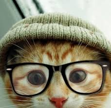 cats twitter background.  Cats 0 Replies 1 Retweet 2 Likes With Cats Twitter Background S