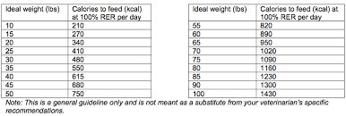 West Highland Terrier Growth Chart 71 Most Popular Cocker Spaniel Weight Chart