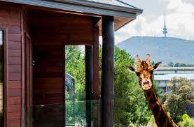 Best 25 Treehouse Hotel Ideas On Pinterest  Amazing Tree House Treehouse Accommodation Nsw