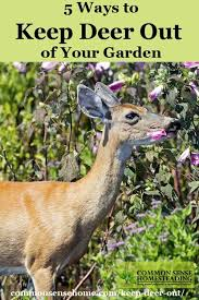 how to keep deer out of your garden. Keep Deer Out Of Your Garden Or Yard And Protect Harvest With Deterrent Options How To T