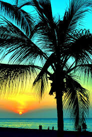 Creativity Palm Trees Sunset Tumblr Tree On Beautiful Design