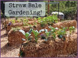 straw bale gardening an easy way to